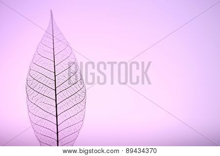 Skeleton leaf on purple background, close up