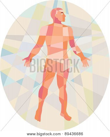 Gross Anatomy Male Oval Low Polygon