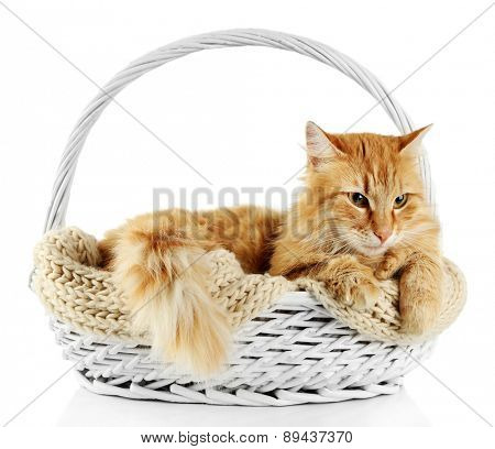 Red cat in wicker basket, isolated on white background