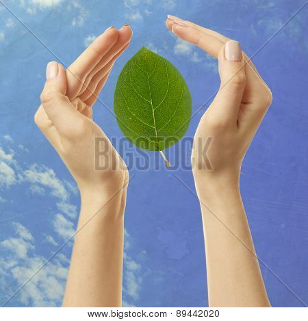 Female hands with green leaf on sky background