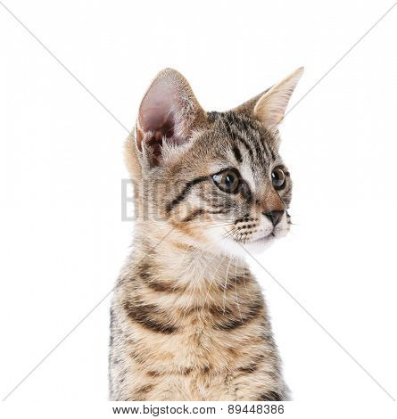 Cute kitten isolated on white