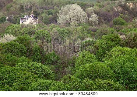 Green Hills Trees