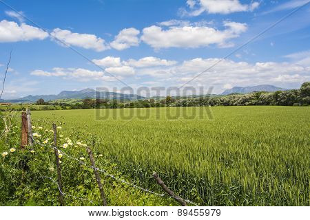 Natural Landscape, Valley, Unripe Wheat Hardvest