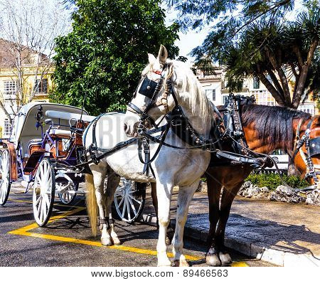 Carriage horses waiting for passengers