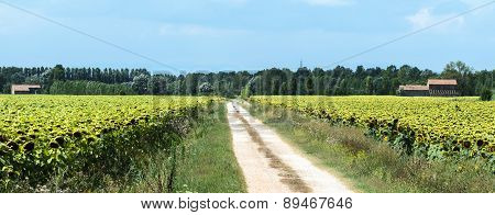 Country Near Ravenna (italy)