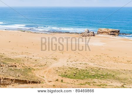 Sheep on beach near Safi,  Atlantic coast of Morocco