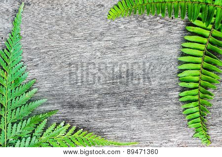 Green Fern Leaf Border On Wood