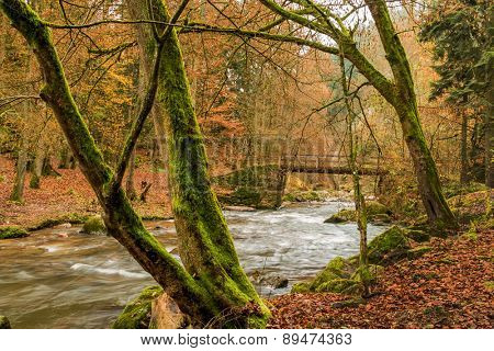 torrential brook in autumn forest, symbol of autumn, water, nature,