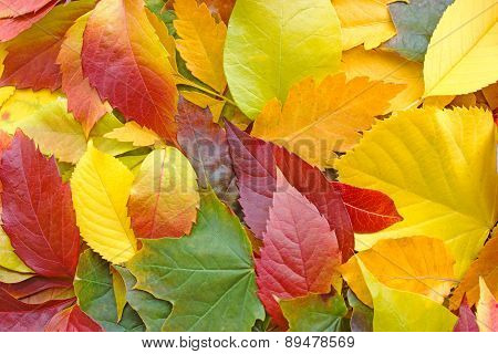 Colorful leaves on the ground