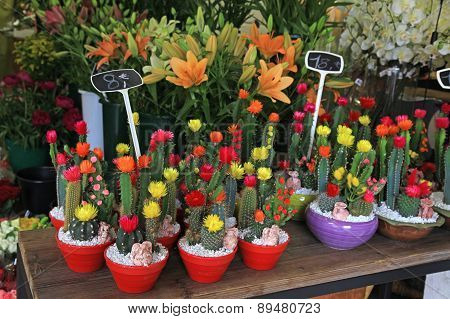 Cactus In Pots In Flower Shop