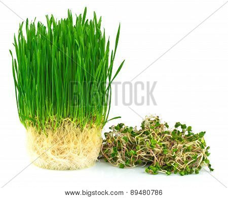 Wheatgrass Juice With Green Radish