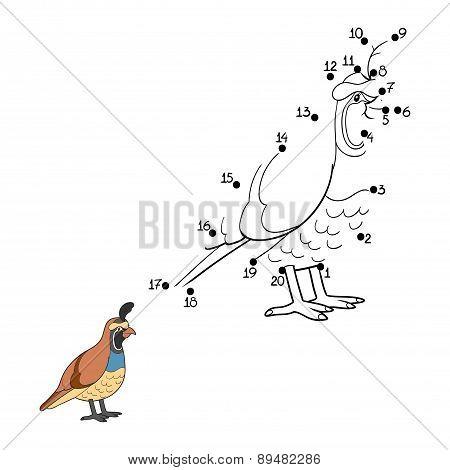 Numbers Game (quail, Bird)