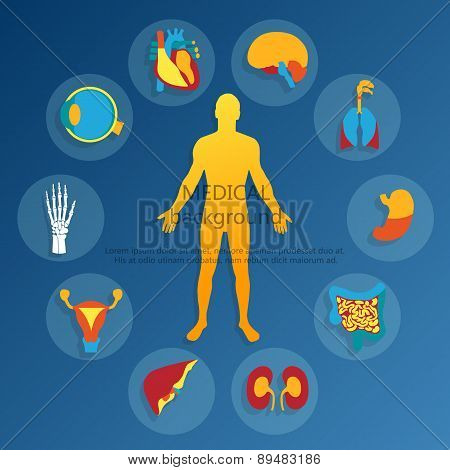Medical background.Human anatomy.