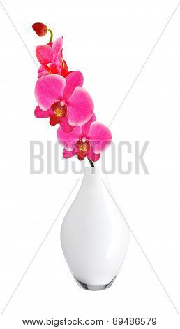 Beautiful Flower Orchid, Pink Phalaenopsis In Vase Isolated On White Background