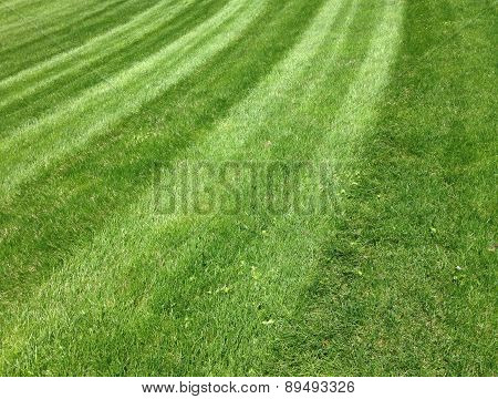 patterned grass