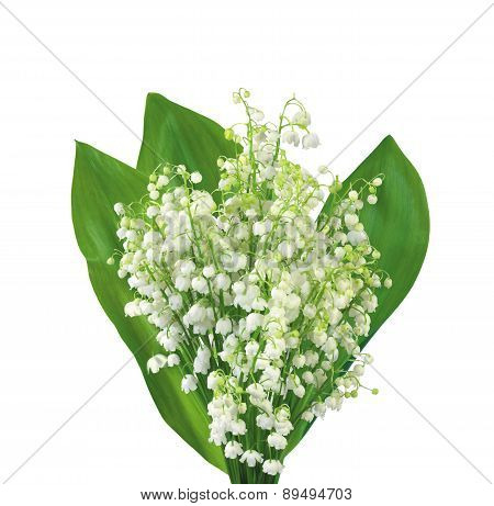 White Flowers Lilies Of The Valley Isolated On White
