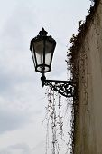 picture of ivy  - In the streets of the historic town hangs on the wall street lamp festooned with ivy - JPG