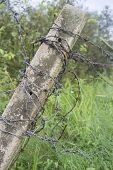 foto of barbed wire fence  - barbed wire fence on meadows - JPG