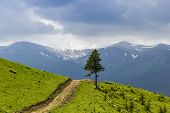 picture of mountain-range  - Mountain road and a lone fir on the background of a mountain range with snowfields - JPG