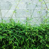 image of bamboo leaves  - Fresh bamboo leaf with block wall background