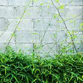 picture of bamboo leaves  - Fresh Bamboo leaf with concrete block wall - JPG