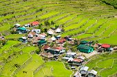 picture of rice  - Rice terraces in the Philippines - JPG