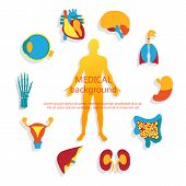 foto of internal organs  - Medical background - JPG