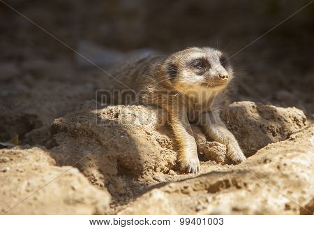 Meerhttp://www.bigstockphoto.com/es/account/uploads/contribute?edit=99401003#cakat Lying On The Sand