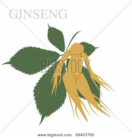 ginseng illustration. vector format