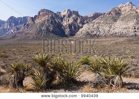 Joshua Tree en Red Rock Canyon