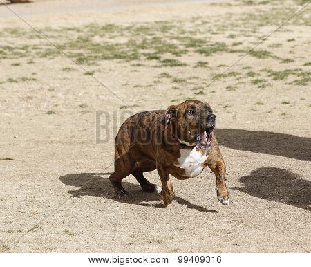 Dog playing at park