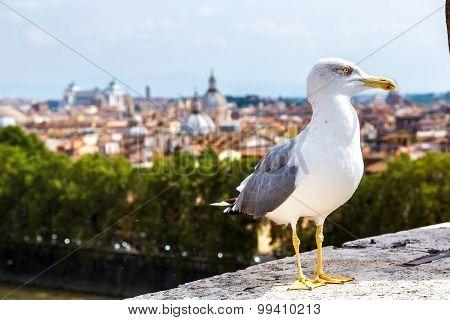 Seagull Above Roman