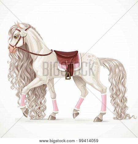 Beautiful White Horse With A Long Mane And Saddle Blanket Isolat