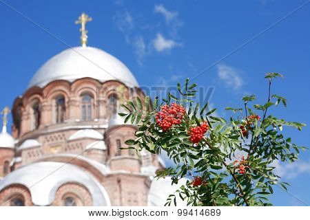 Russian Rowan-tree