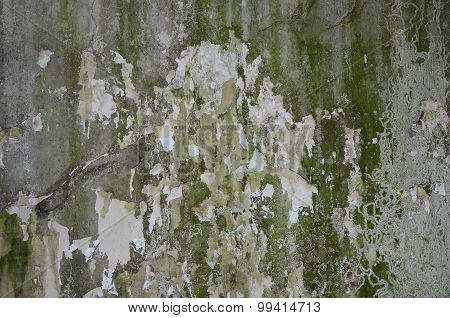 crack concrete wall with grunge texture and moss green algae , texture background