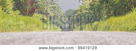 Palm trees by the roadside