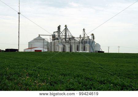 Silos Behind a Soybean Field