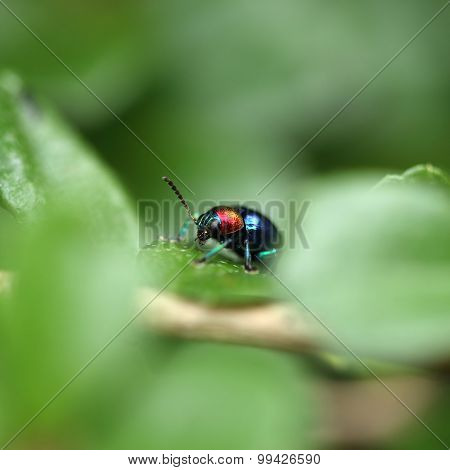 A Beetle Perched On A Plant Leaf