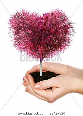 Red tree heart shape in hands isolated on white