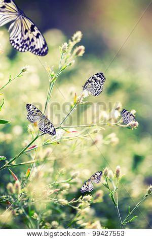 Beautiful butterflies on wildflowers
