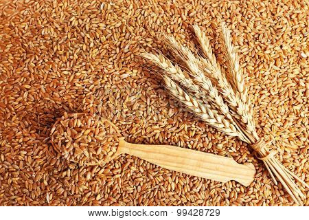 Wooden spoon on wheat grains background