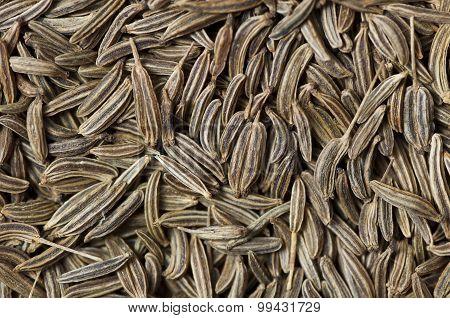 Caraway (carum Carvi) Seeds Background