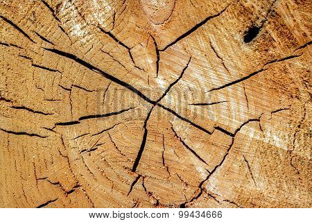 Cut Wood With Knots And Cracks