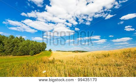 Stubble Field Under Blue Sky With White Clouds