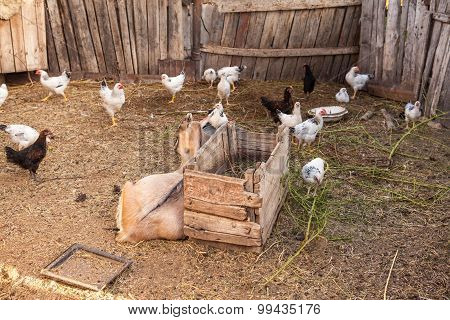 Barnyard Animals In A Pen