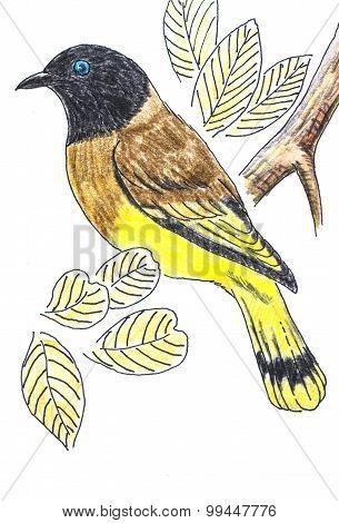 Black-headed Bulbul Bird Drawing