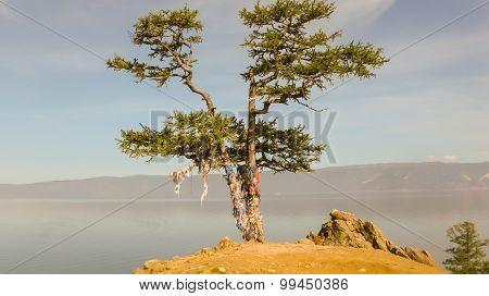 Tree In Ribbons.