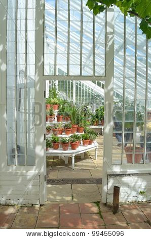 Interior of beautiful old greenhouse