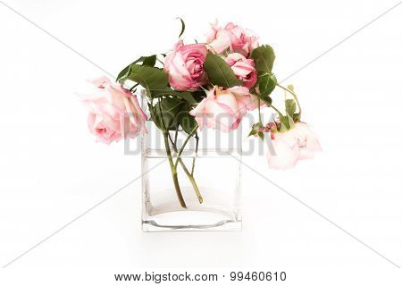 Pink Roses In A Glass Vase With Light  Background