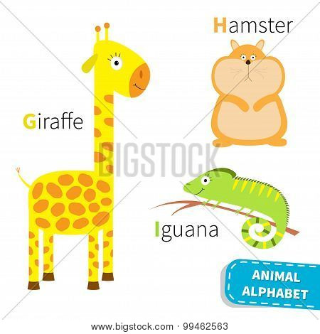 Letter G H I Giraffe Hamster Iguana Zoo Alphabet. English Abc With Animals Education Cards For Kids